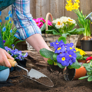 Gardening 300square