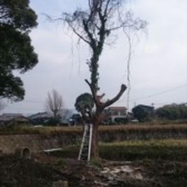 | 木の伐採