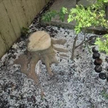庭木の伐採後