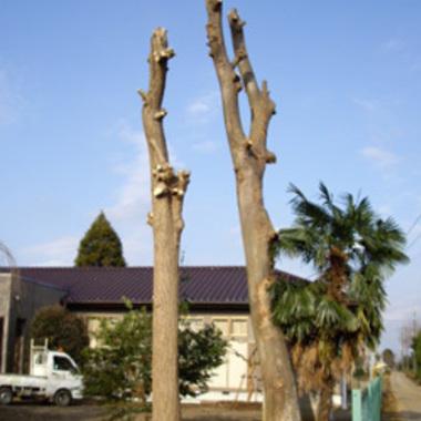 八千代市×木の伐採×おっくうに感じる作業もしっかり行う剪定作業の施工後写真(0枚目)