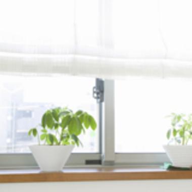 | ハウスクリーニング 植木鉢
