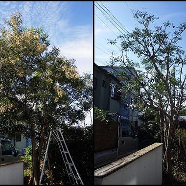 草木の伐採前後