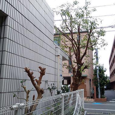 草木の伐採後の建物横