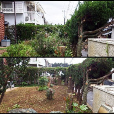 草木の剪定 伐採後の庭