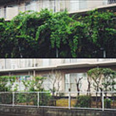 剪定後の集合住宅の庭