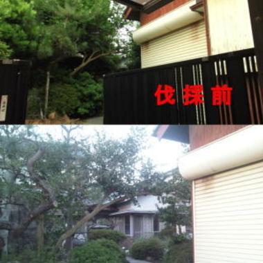 | 住宅庭 植木の剪定 植木の伐採比較写真