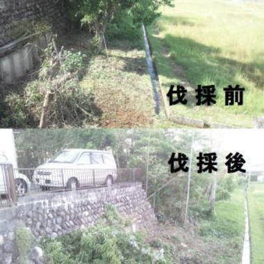 | 駐車場下 植木の剪定 植木の伐採比較写真