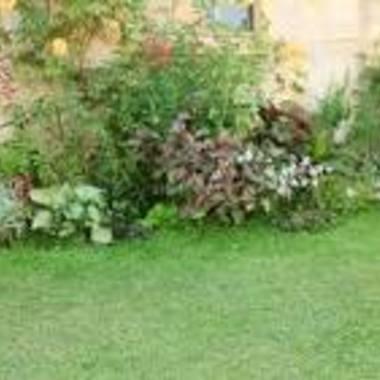 | 庭木のお手入れ・草刈り作業・除草剤の散布
