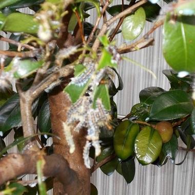 | 木の殺虫消毒後