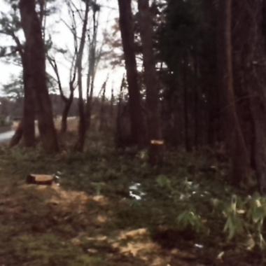 | 大木伐採工事後