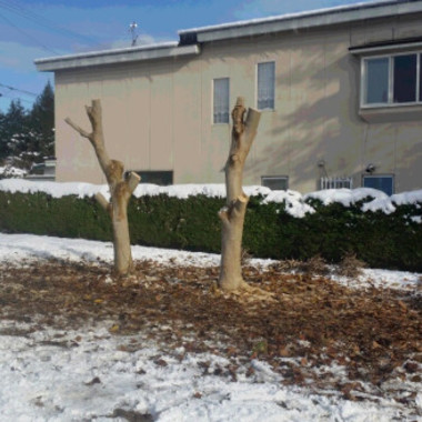 | 庭木伐採後