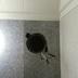 浴室の換気扇交換途中