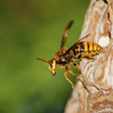 津山市 スズメバチ ハチの巣撤去