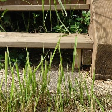 ウッドデッキの木階段の補修工事 簡単な補修でお安くキレイに!の施工後写真(0枚目)
