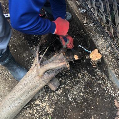 びわの木伐採・下地補修工事の施工後写真(0枚目)