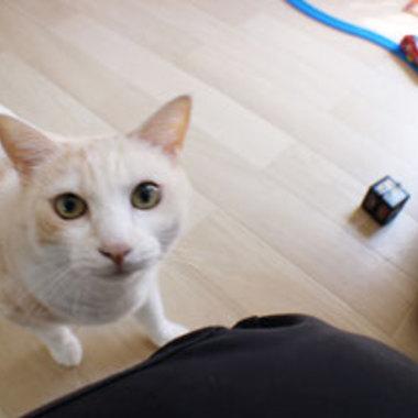 リビング増床リフォーム 完了 猫1