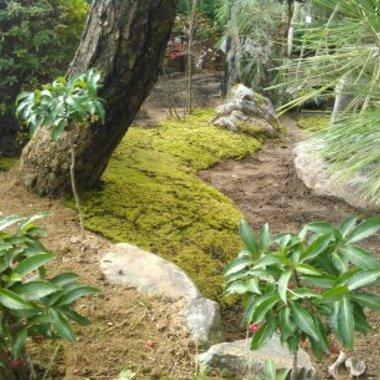 庭工事 完了 植木2