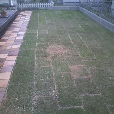 庭リフォーム完了 芝生