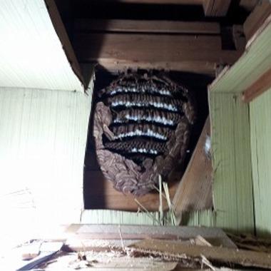 スズメバチ駆除前 壁の中