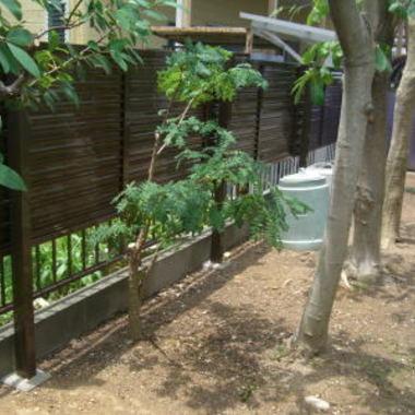 フェンス設置後1