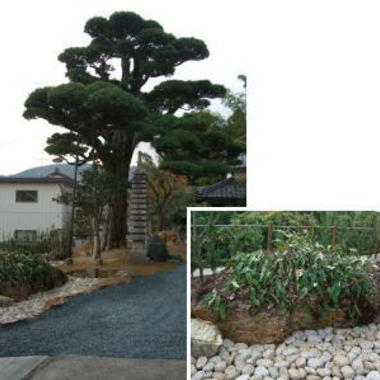 庭のリフォーム後