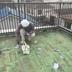 屋上防水ウレタン 手摺塗装工事 作業中