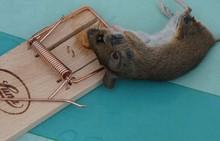 ネズミ被害の予防法