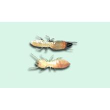 シロアリ駆除の基礎知識